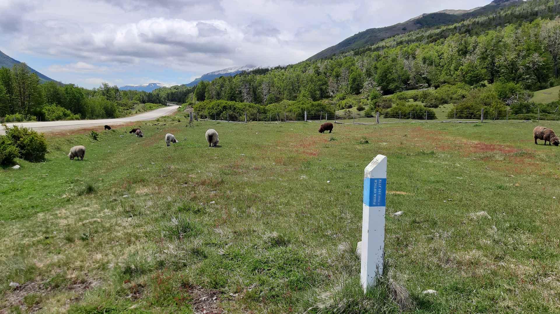 Un monolito blanco y celeste que marca el paso de la conectividad en una zona cordillerana de Neuquén, con ovejas alrededor.